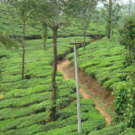 In the Lap of Nature-Virgin Valparai