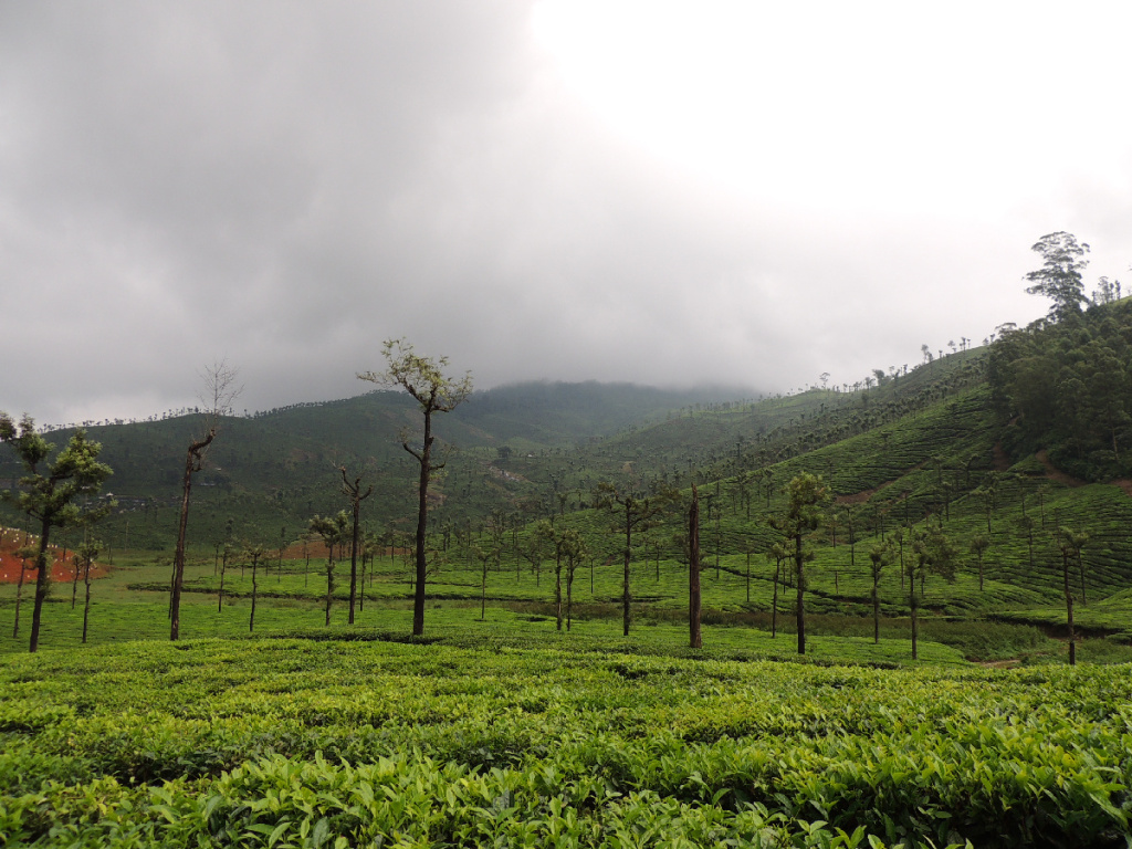 Tea gardens from the wooden chalet