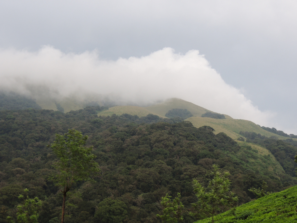 Grass Hills at Valparai