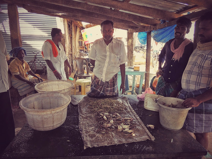 Fish Auction in Mimisal