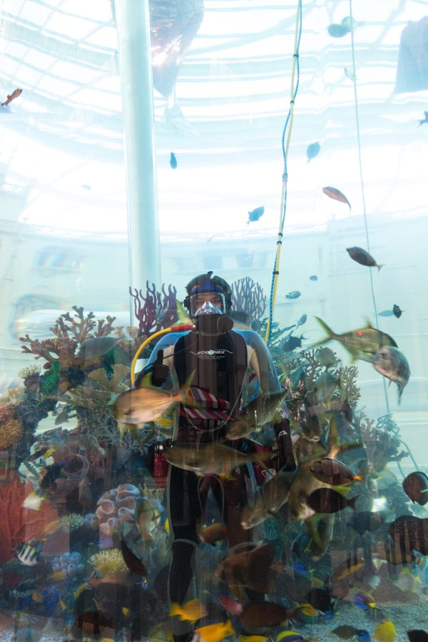 A diver in the aquarium at MGM Macau feeding fishes